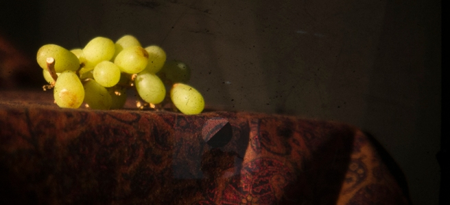 Experimental still life photograph - Julie Dawn Dennis