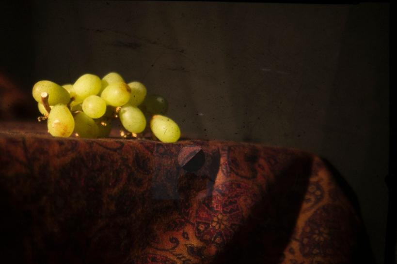 Experimental still life photograph - Julie Dawn Dennis