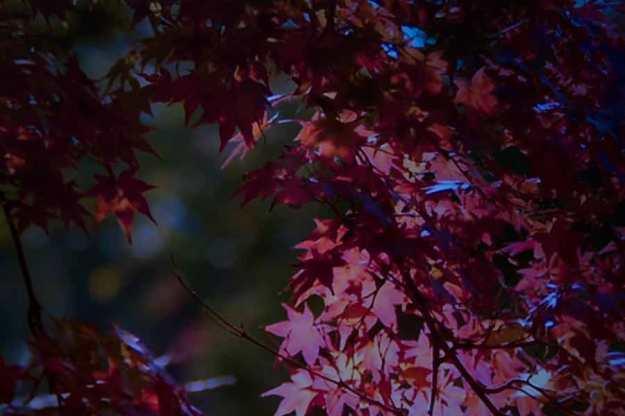 Julie Dawn Dennis - TV Land #4 [Photograph]