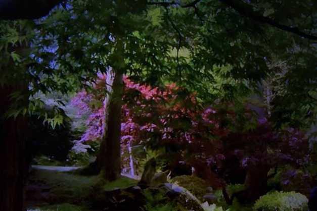 Julie Dawn Dennis - TV Land #3 [Photograph]