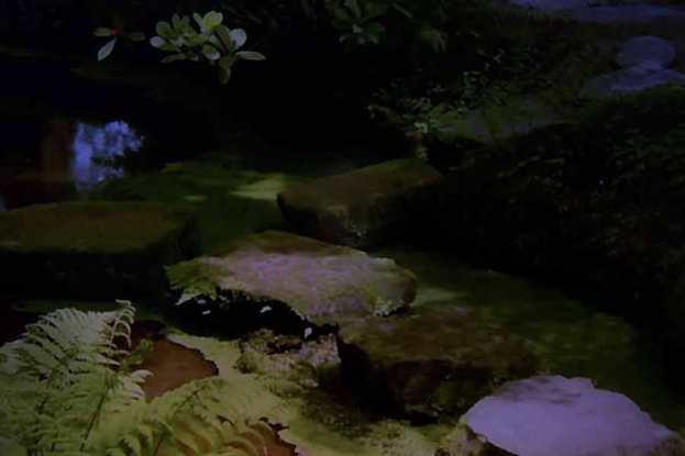 Julie Dawn Dennis - TV Land #6 [Photograph]