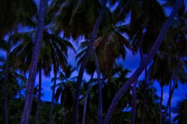 Julie Dawn Dennis - TV Land #7 [Photograph]